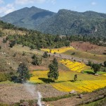 Hsipaw, entre brume et rizières